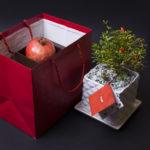 Yalda Gift 03 150x150 - آجیل شب عید
